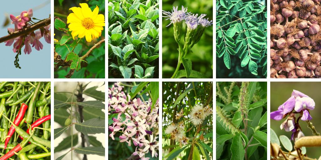 botanicals 12.png