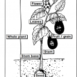 Plant doctor app plant parts