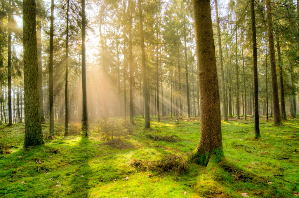 Forest bathed in sunlight