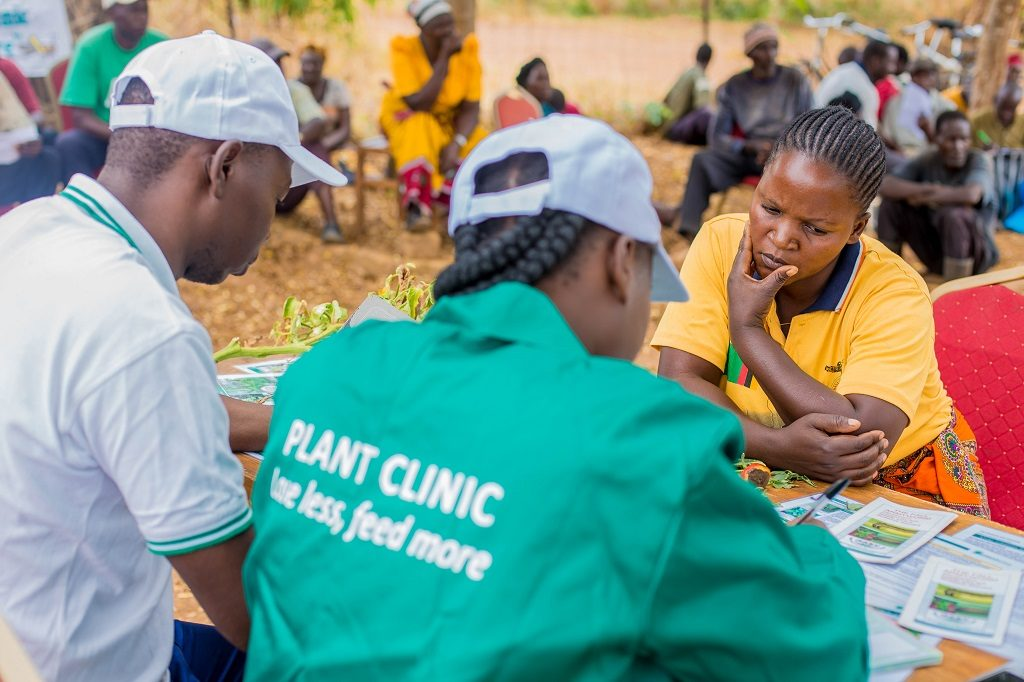 Chinyunyu Plant Clinic in Rufunsa district, Zambia. Photo: David Ng'ambi for CABI