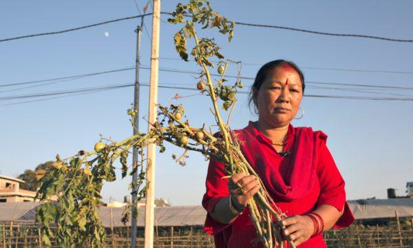 female farmer in Nepal