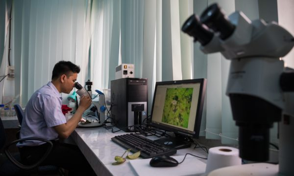 A plant scientist looks through a micrscope while a close-up of a plant displays in the screen next to him,