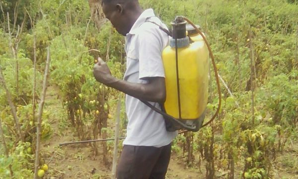 Young farmer spraying pesticides on crop without proper protective clothing