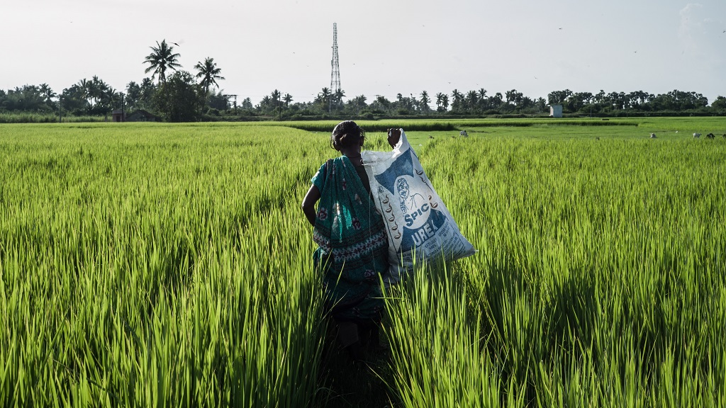 55 year old Valli Kupuswamy carries a bag of grass (for cattle) she collected from her paddy field in Embalam village outside of Pondicherry, India. Photo: Sanjit Das/Panos