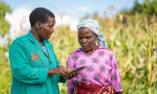 Plant doctor in Malawi using a tablet to share information with a farmer