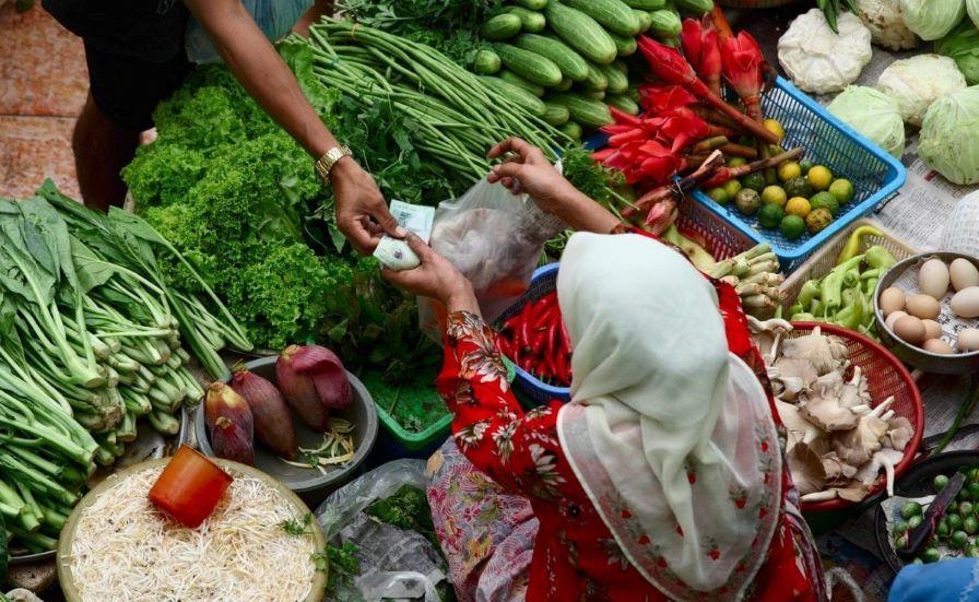 safer food plantwiseplus
